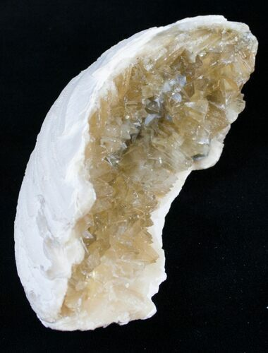 "4"" Partial Golden Calcite Crystal Clam Fossil"