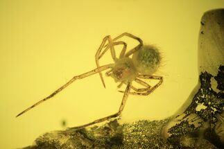 Fossil Spider (Araneae) In Baltic Amber For Sale, #120593