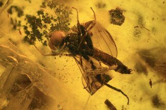 Detailed Fossil Dance Fly (Empididae) In Baltic Amber For Sale, #120614