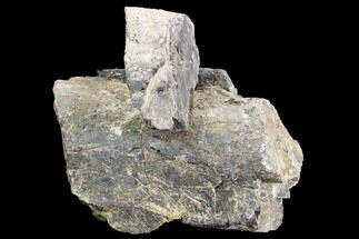 Unidentified Sauropod - Fossils For Sale - #120552