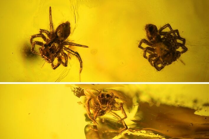 Two Fossil Spiders (Araneae) In Baltic Amber