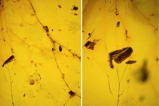Buy Fossil Spider Web With Insect Leg & Mites In Baltic Amber - #123388