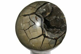 Septarian with Black Calcite  - Fossils For Sale - #124503