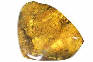 "1.4""  Polished Chiapas Amber (6 grams) - Mexico For Sale, #114893"