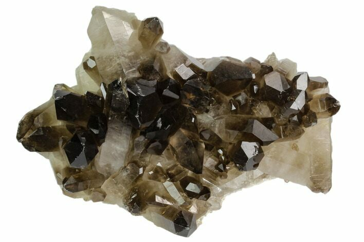"4.6"" Dark Smoky Quartz Crystal Cluster - Brazil"