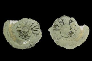 "Buy 1.65"" Cut Pyritized Ammonite (Pleuroceras) Fossil Pair - Germany - #125374"