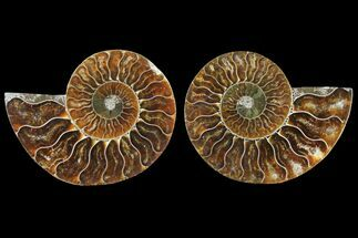 "3.35"" Sliced Ammonite Fossil (Pair) - Agatized For Sale, #125012"