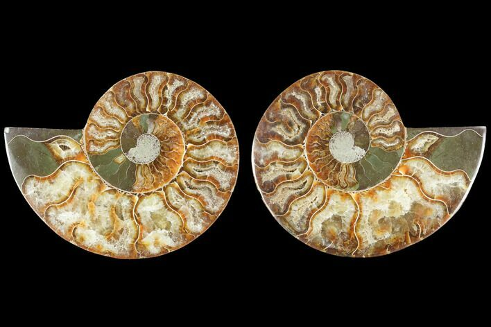 "3.65"" Sliced Ammonite Fossil (Pair) - Agatized"
