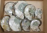 "Wholesale Lot: 4 - 7.2"" Cut/Polished Ammonite Fossils - 8 Pairs - #117105-2"