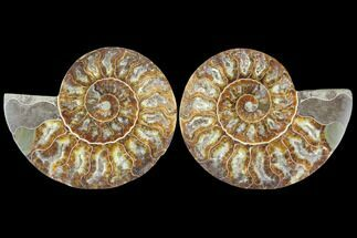 "4"" Sliced Ammonite Fossil (Pair) - Agatized For Sale, #125036"