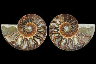 "3.55"" Sliced Ammonite Fossil (Pair) - Agatized For Sale, #125042"