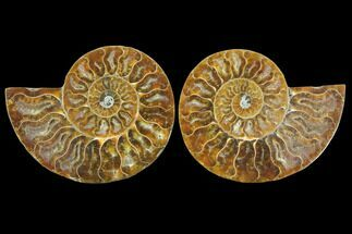 "Buy 3.25"" Sliced Ammonite Fossil (Pair) - Agatized - #125044"