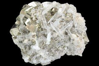 Pyrite & Quartz - Fossils For Sale - #126606