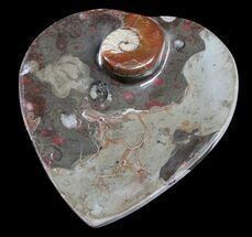 Buy Heart Shaped Fossil Goniatite Dish - #8860