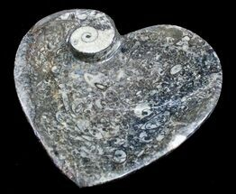 Buy Heart Shaped Fossil Goniatite Dish - #8878