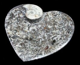 Buy Heart Shaped Fossil Goniatite Dish - #8881