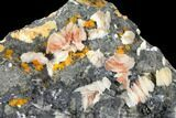 "7.6"" Cerussite, Wulfenite and Bladed Barite on Galena - Morocco - #128072-1"