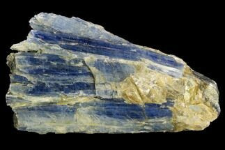 "Buy 3.2"" Vibrant Blue Kyanite Crystals In Quartz - Brazil - #127366"