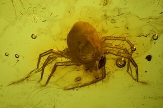 Buy Detailed, Large Fossil Mite (Acari) In Baltic Amber  - #128290