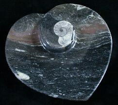 "Buy 6.5"" Heart Shaped Fossil Goniatite Dish - #9010"