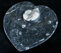 "6.5"" Heart Shaped Fossil Goniatite Dish For Sale, #9008"
