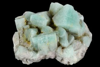 "2.3"" Amazonite Crystal Cluster - Colorado For Sale, #129659"