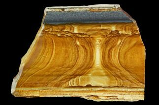 "4.7"" Polished Golden Picture Jasper Slab - Nevada For Sale, #129725"