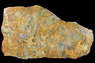 "Buy Giant, 28.1"" Polished, Crazy Lace Agate Slab - Western Australia - #130402"
