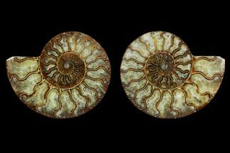 "Buy 5.4"" Agatized Ammonite Fossil (Pair) - Beautiful Preservation - #130063"