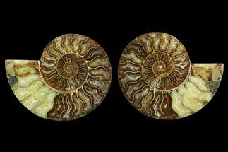 "Buy 5.4"" Agatized Ammonite Fossil (Pair) - Beautiful Preservation - #130072"