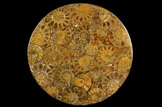 "Buy 8"" Composite Plate Of Agatized Ammonite Fossils - #130567"