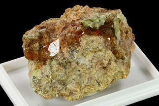 "Buy 1.8"" Orange Grossular Garnet Cluster with Epidote - Bishop, California - #131329"