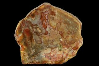 "3.9"" Petrified Wood (Araucaria) Slab - Madagascar  For Sale, #131405"