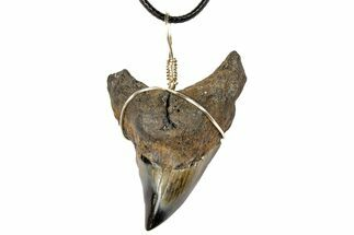 "Buy 2.2"" Fossil Shark (Benedini) Tooth Necklace - #130918"