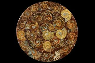 "Buy 4.5"" Composite Plate Of Agatized Ammonite Fossils - #131551"