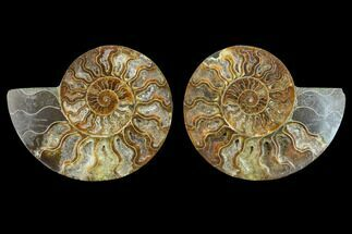 "Buy 5.9"" Agatized Ammonite Fossil (Pair) - Beautiful Preservation - #130006"