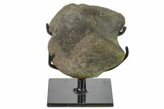 "3.6"" Hadrosaur (Hypacrosaur) Phalange with Metal Stand - Montana For Sale, #132005"