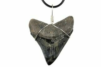 "2.35"" Fossil Megalodon Tooth Necklace  For Sale, #130952"