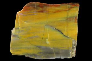 "Buy 4.7"" Colorful Petrified Wood (Araucarioxylon) Slab - Arizona - #132235"