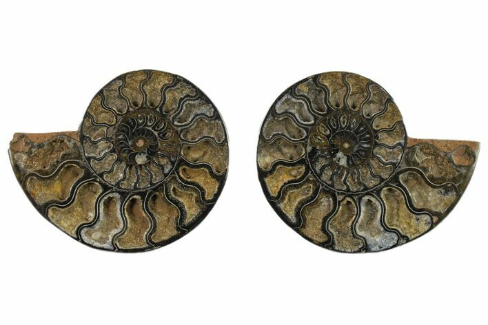 "4.95"" Cut/Polished Ammonite Fossil (Pair) - Unusual Black Color"