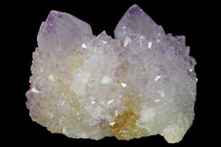 "Buy 1.5"" Cactus Quartz (Amethyst) Crystal Cluster - South Africa - #132484"