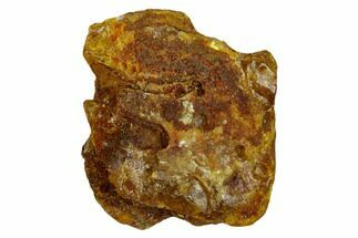Amber - Fossils For Sale - #132828