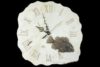"12.7"" Wide Clock With Cockerellites Fish Fossil - Wyoming For Sale, #132878"