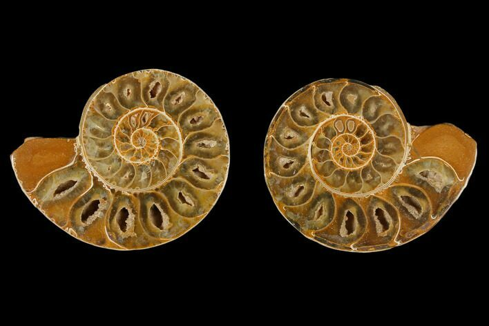 "3.4"" Cut & Polished Agatized Ammonite Fossil (Pair)- Jurassic"
