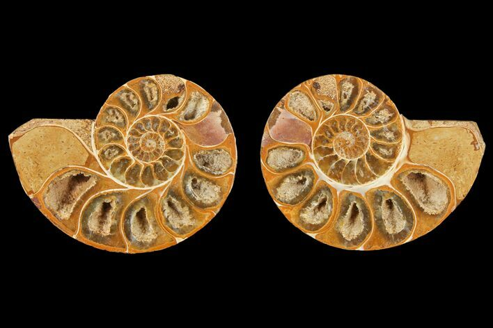 "3.1"" Cut & Polished Agatized Ammonite Fossil (Pair)- Jurassic"