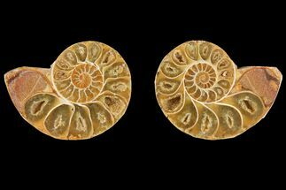 "Buy 3"" Cut & Polished Agatized Ammonite Fossil (Pair)- Jurassic - #131629"