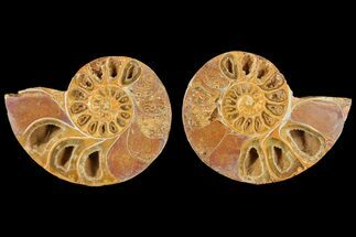 "4.2"" Cut & Polished Agatized Ammonite Fossil (Pair)- Jurassic For Sale, #131747"