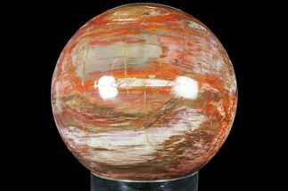 "Massive, 9.9"" Colorful Petrified Wood Sphere - Madagascar For Sale, #133676"