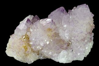 "2.6"" Cactus Quartz (Amethyst) Crystal Cluster - South Africa For Sale, #134330"