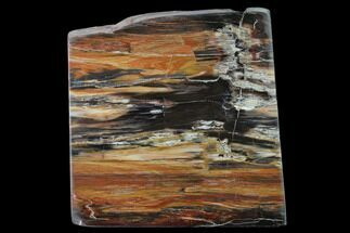 "Buy 4.7"" Petrified Wood (Araucioxylon) Rip-Cut - Circle Cliffs, Utah - #135646"